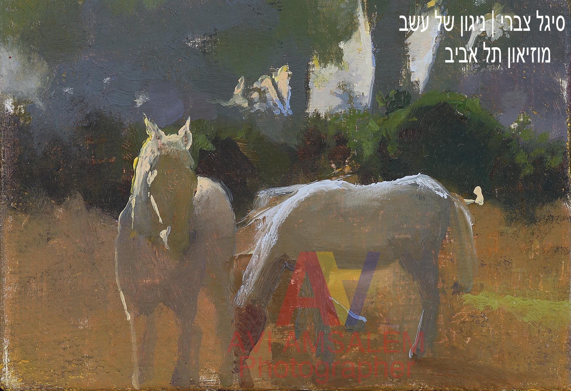 צילום ציורים.123