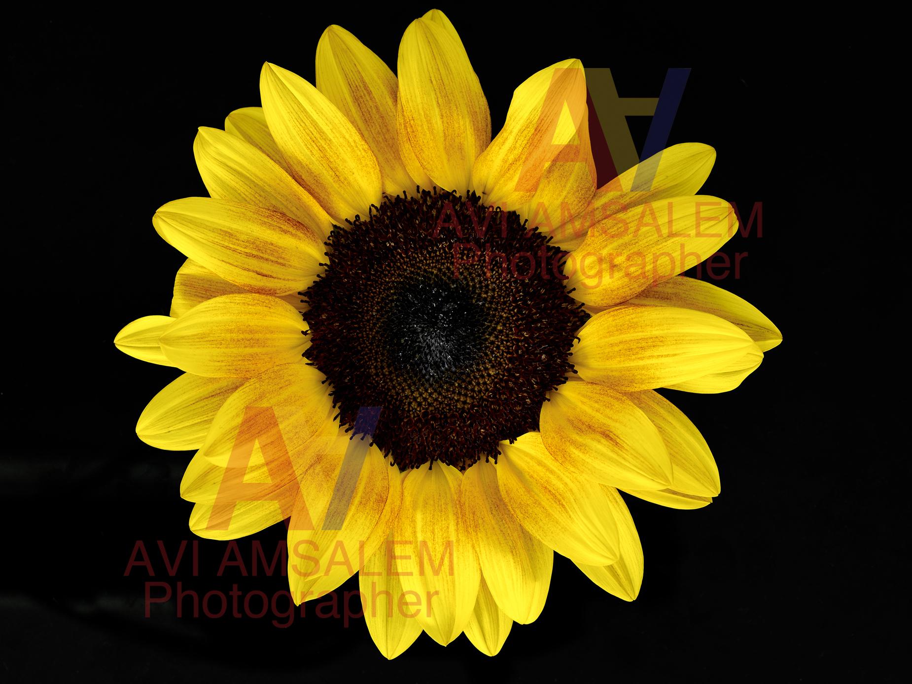 צילום פרחים.10