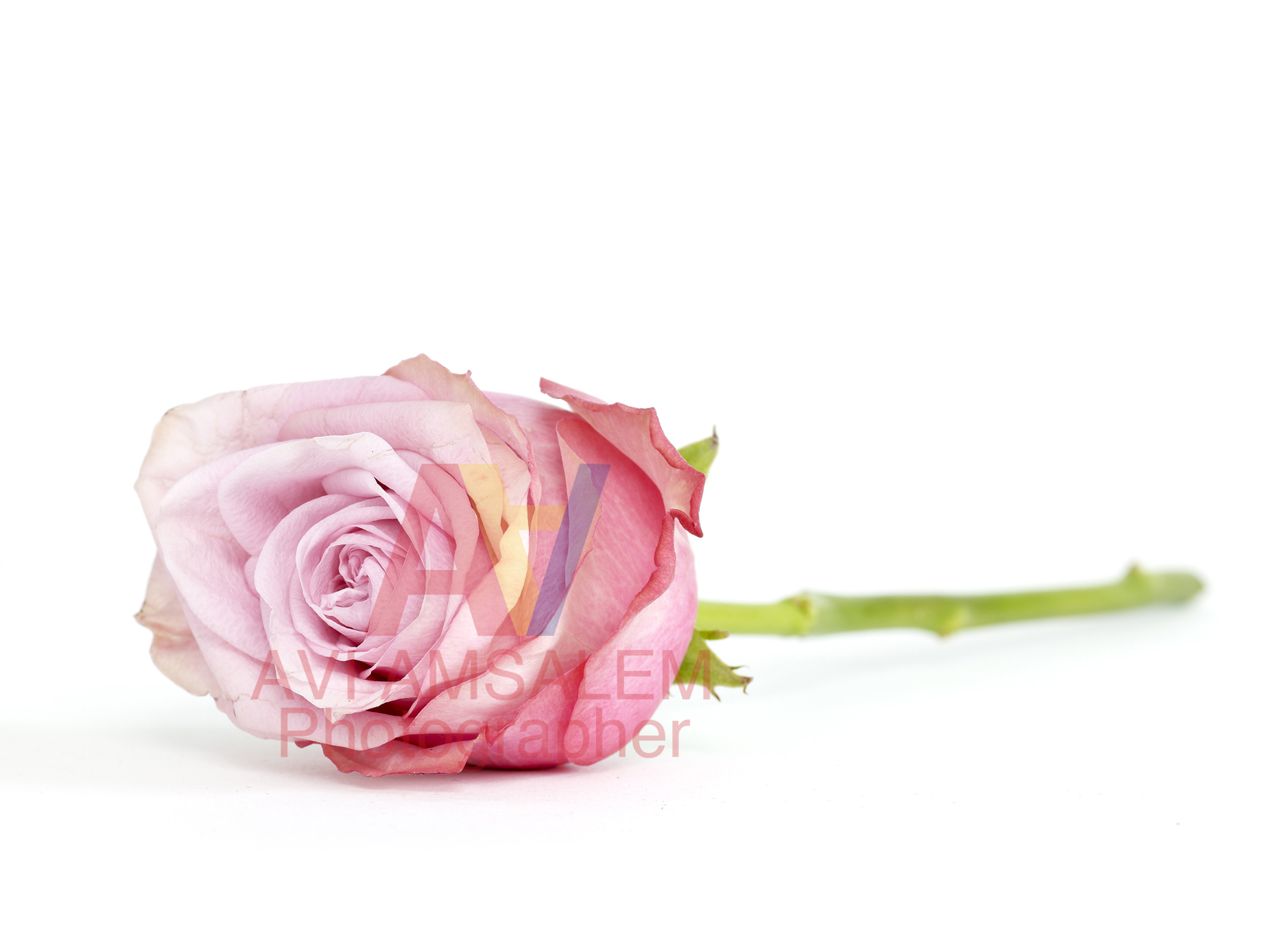 צילום פרחים.6