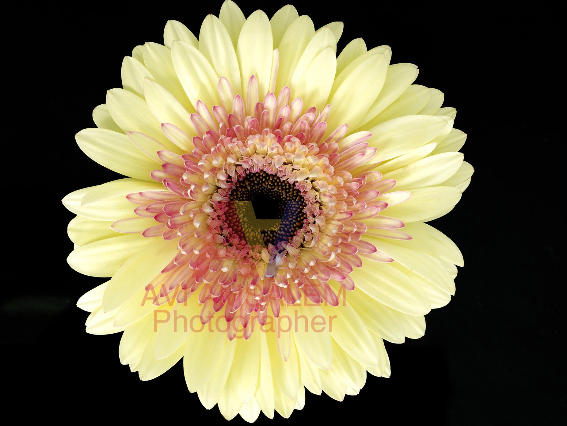 צילום פרחים.8